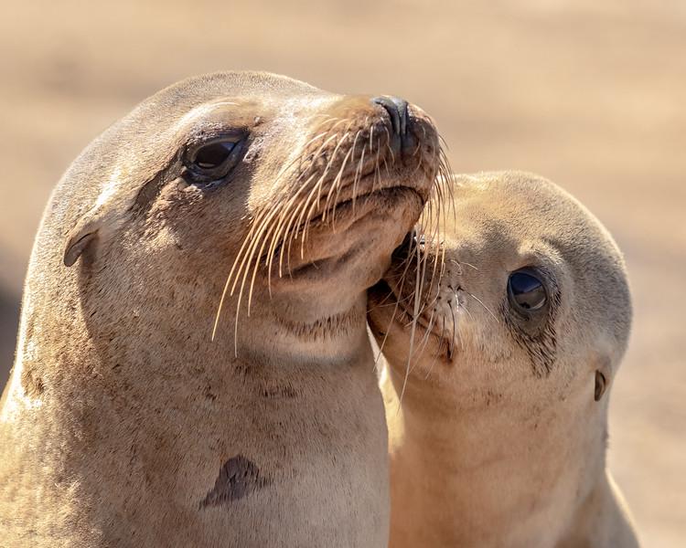 sea lion mom and pup.jpg