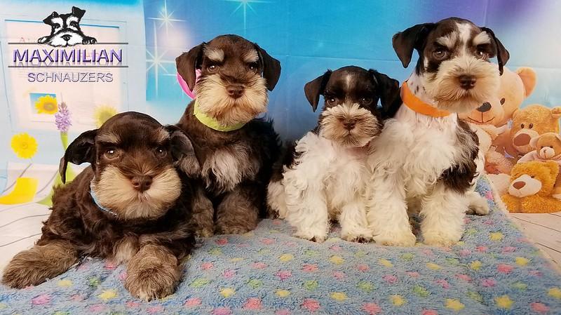 Minnie Pups 050.jpg