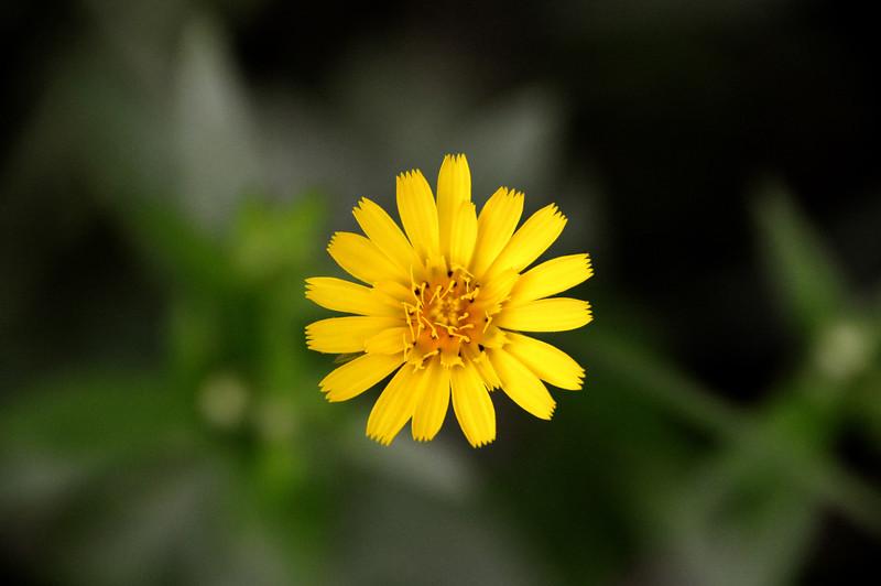 Sunflower-small-JanesvilleWI.jpg