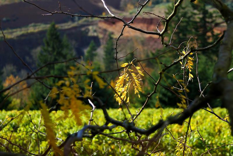BC The Barn Cat 2010 Calendar, Maresh Vineyard Oregon  2966.jpg