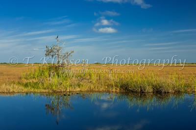 Everglades, Various