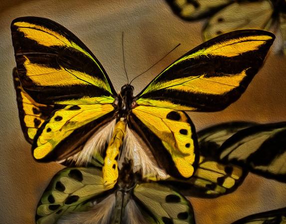 World Of Butterflies - Jan 2014