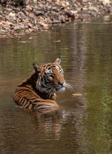 India_April_2019-1493.jpg