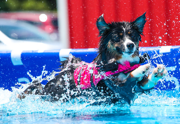 Stoney Run Canine Camp UKC Dock Diving Sat 7/11/20