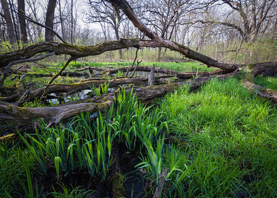 DuPage County Forest Preserves