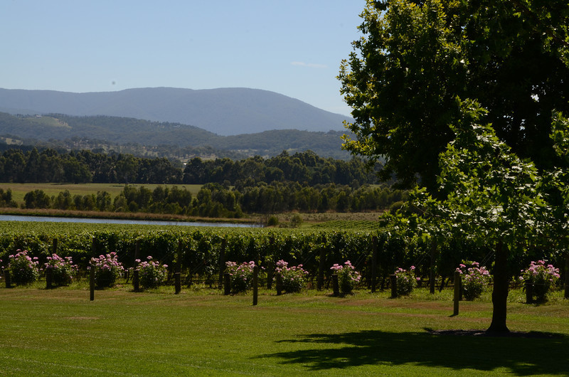 A day in the Yarra valley, the wine growing area just north of the city