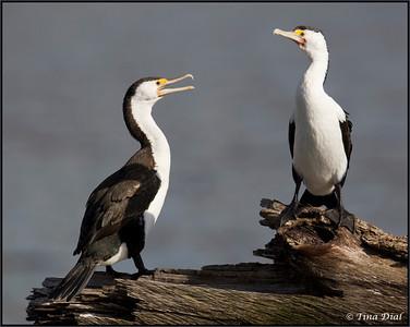 Birds 2012