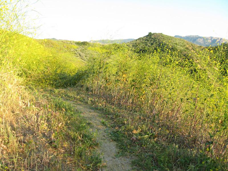 20080417014-New Millenium Trail, trailwork.JPG