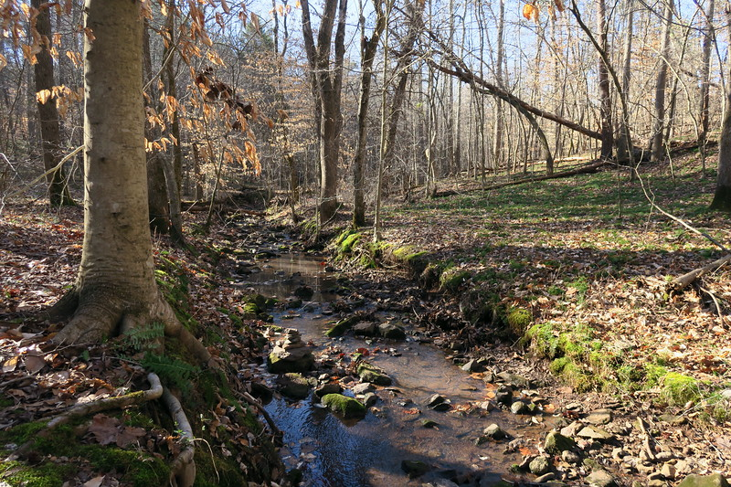 Mayo River State Park, Rockingham County (3-3-18)