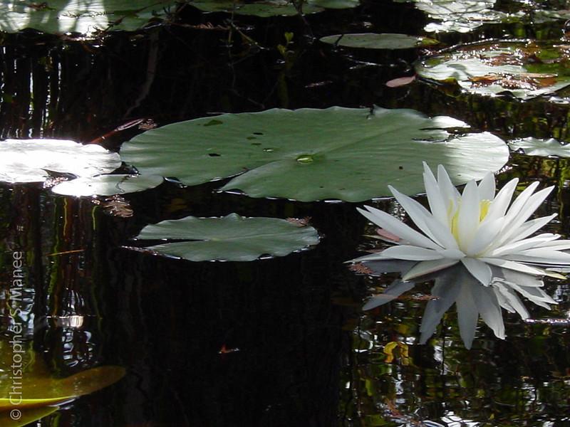 0610_Cypress Gardens018.jpg