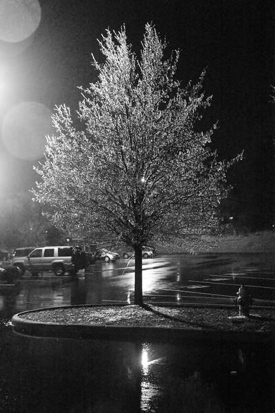 Freezing-rain-tree.jpg