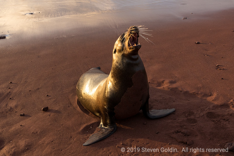 Galapagos 0719 SJGoldin-502.jpg