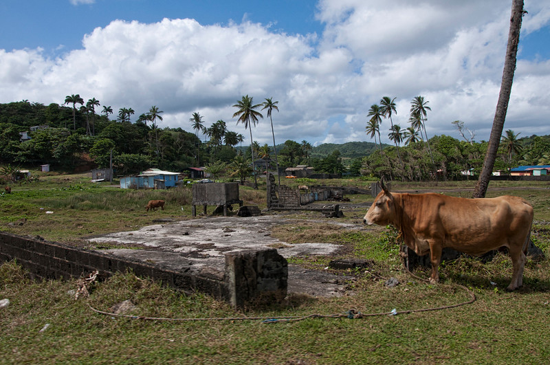 The countryside of Dominica.