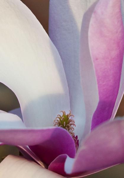 Magnolias13-9210.jpg
