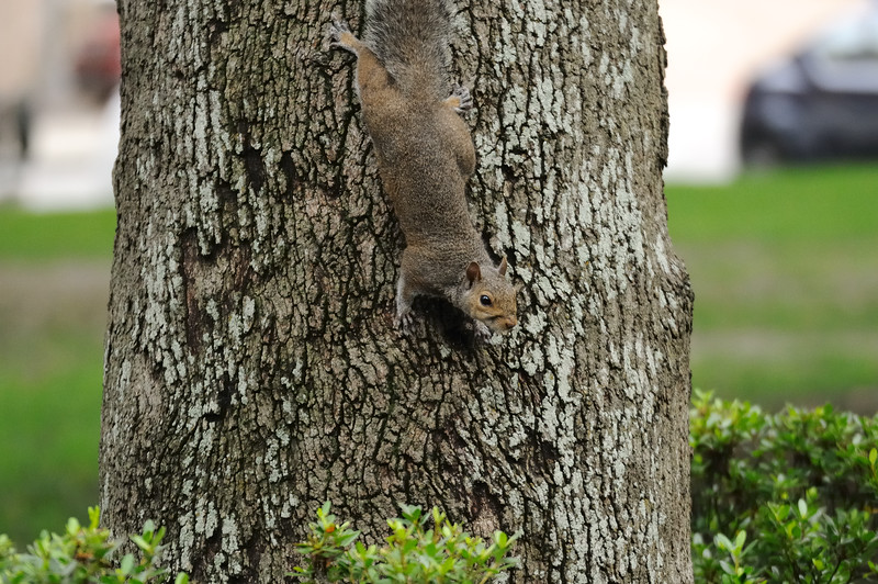 The squirrels didn't seem too upset by all the commotion.