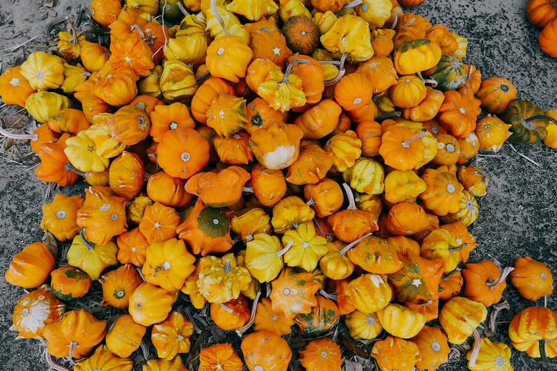little pumpkins (1 of 1).jpg