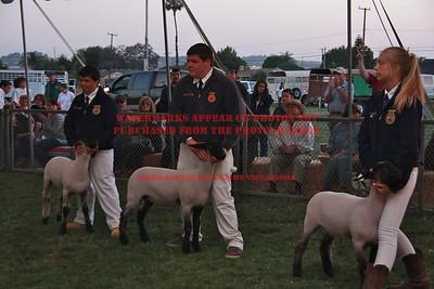 2012 LHVCF Sheep