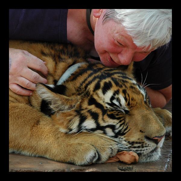 Tiger - Thailand - 2010.jpg