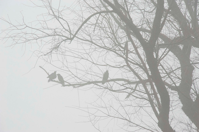 birds in fog.jpg