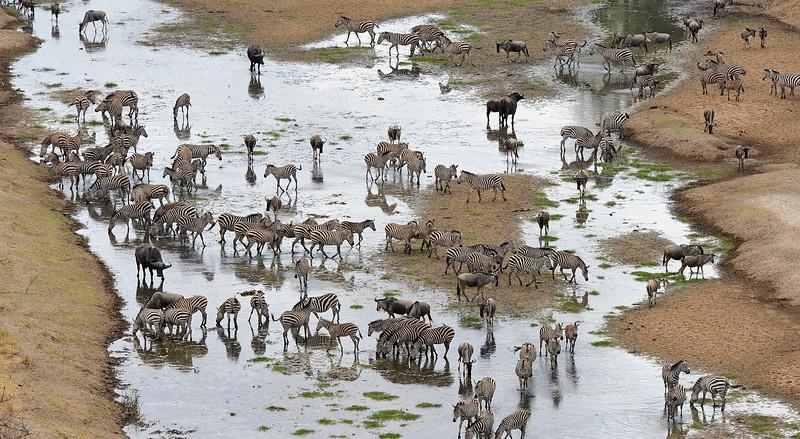Africa-Tanzania