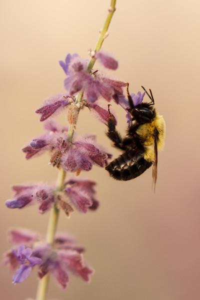 Feeding Bee-haviors