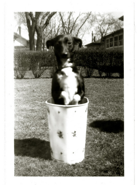 Tippy. March 28, 1948.