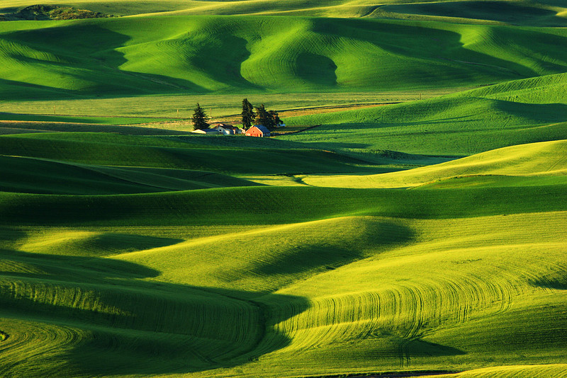 First light on Wheatfields, Washington