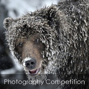 Photo Competition Slide Show