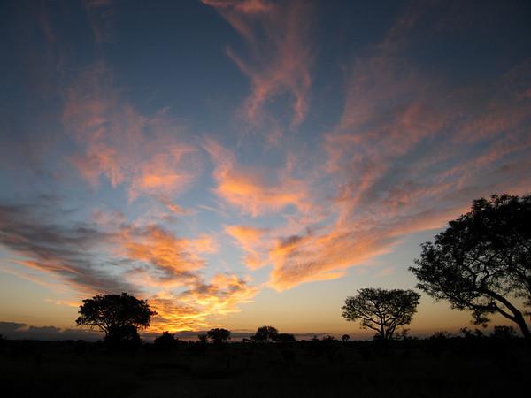 ROAR - Africa