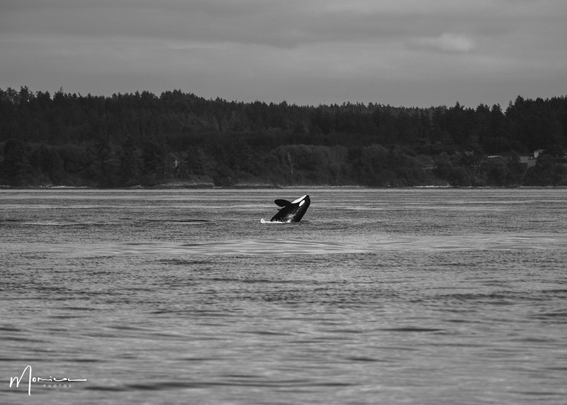 2019-08-31 - Whale Watching-2497_edit.jpg