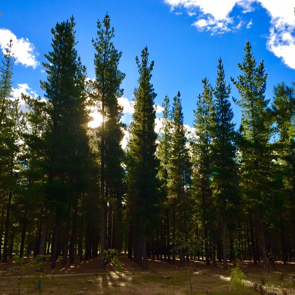 Sun through the Trees.jpg