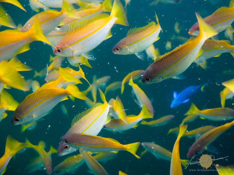 Getting up close to the school of fishes at the pontoon
