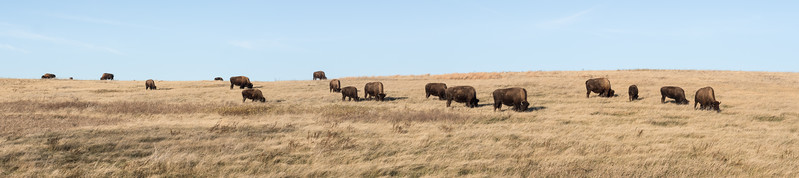 """Where the """"Bison"""" Roam Theodore National Park"""