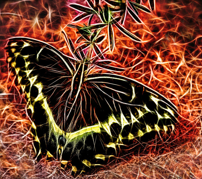 The Butterfly.jpg
