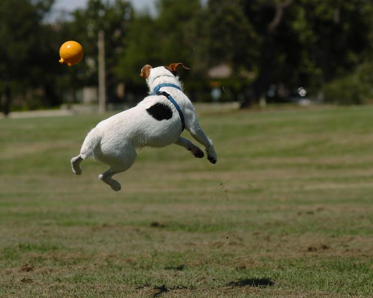 Billy Jack Flying.jpg