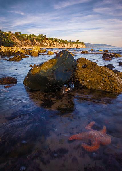 Starfish Malibu Pt Dume Southern California