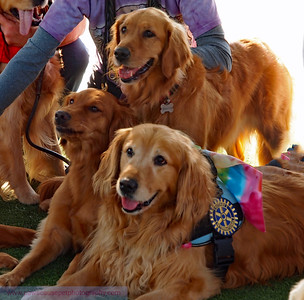 2020 RRUFF Calendar Golden Meetup