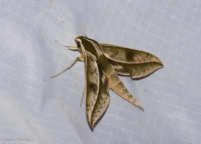 Papillons de l'Equateur