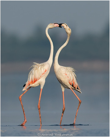 Birds of Pulicat