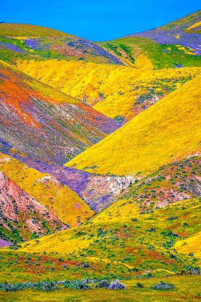 Carrizo Plain National Monument Wildflowers Superbloom Spring Symphony 30!  Elliot McGucken Fine Art Landscape Nature Photography Prints & Luxury Wall Art