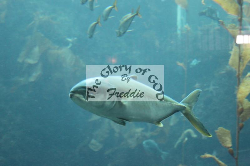 Aquarium 20145.jpg