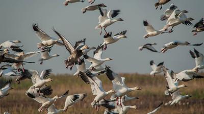 Wildlife & Bird Videos