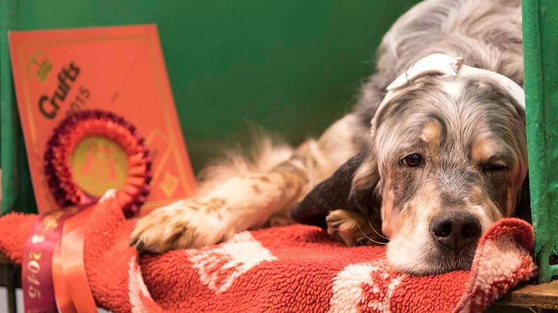 Dog-Grooming-Matlock-K9.jpeg