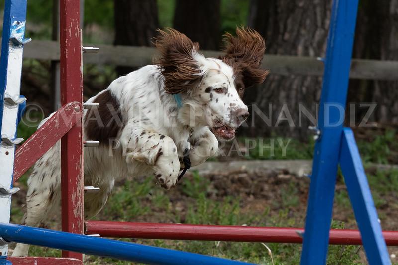 Dogs-7940.jpg