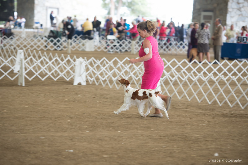 2019 Malibu Kennel Club-9990.jpg
