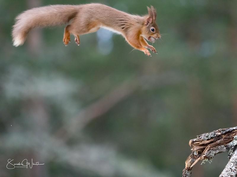 RedSquirrelBootCamp_120217_552.jpg