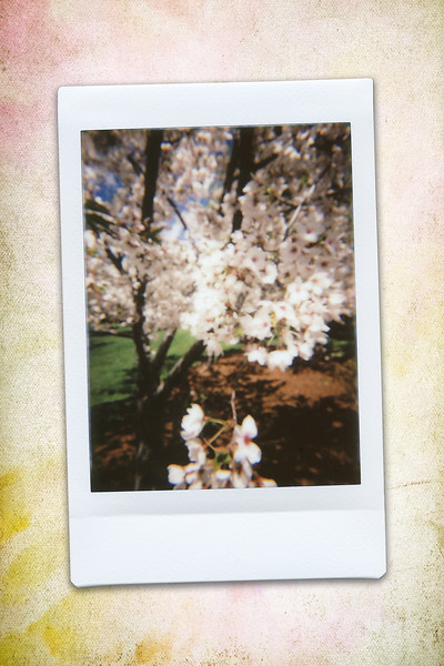 170430_ARD-cherryblossoms_INSTAX03.jpg