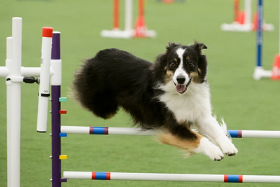 York Kennel Club AKC Agility Trial October 24-25