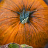 Pumpkin-008