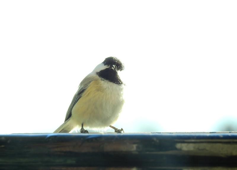 birds (124).JPG